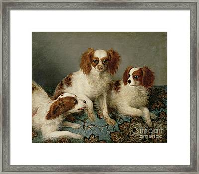 Three Cavalier King Charles Spaniels On A Rug Framed Print by English School