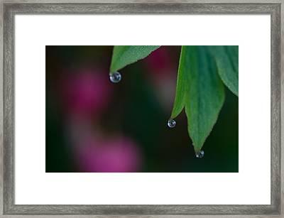 Three Drops Framed Print