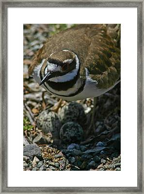 Framed Print featuring the photograph Three Eggs. by Mitch Shindelbower