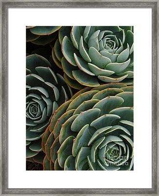 Three Hens Framed Print by Mark Holbrook