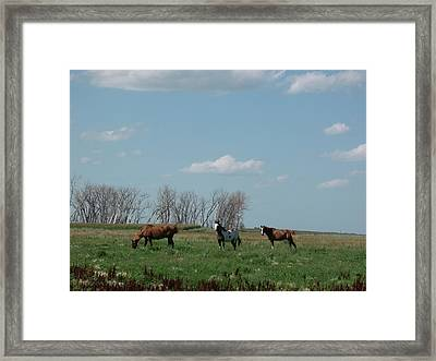 Three Horse Ranch Framed Print by Brian  Maloney
