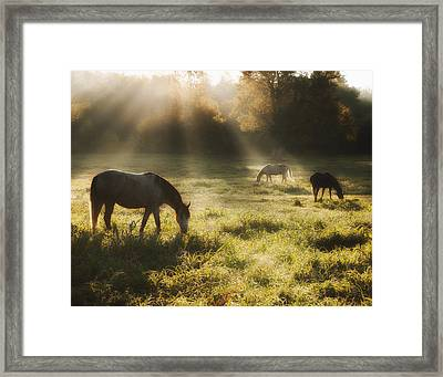 Three Horse Sunrise Framed Print by Ron  McGinnis
