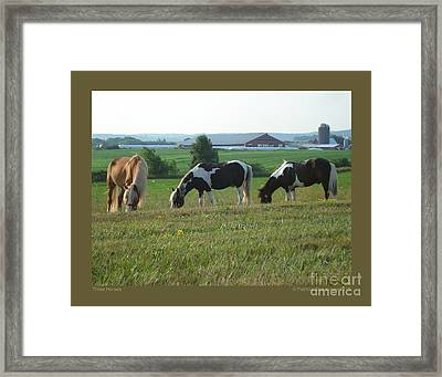 Three Horses Framed Print by Patricia Overmoyer