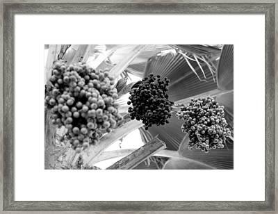 Three In A Row Framed Print by Elizabeth  Doran