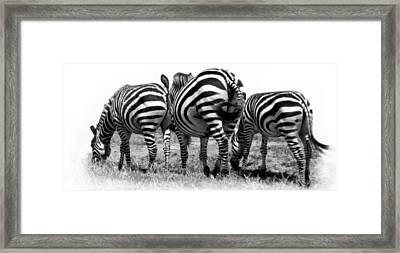 Framed Print featuring the photograph Three In A Row by Jacqi Elmslie