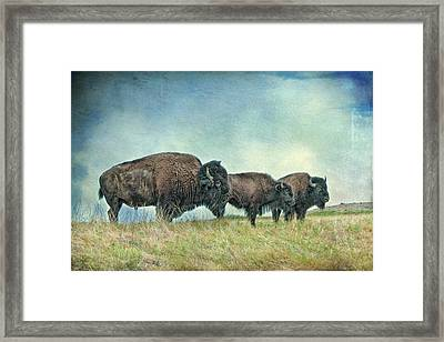 Three In A Row Framed Print by Tamyra Ayles