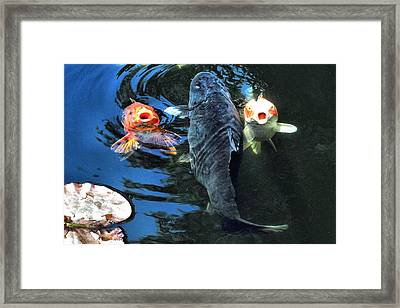 Three Is Crowd Framed Print