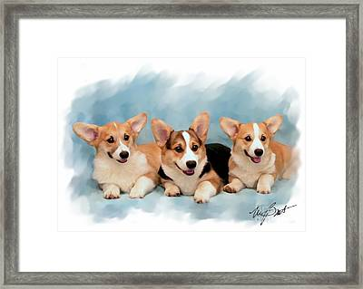 Three Musketeers Corgis Framed Print by Maxine Bochnia