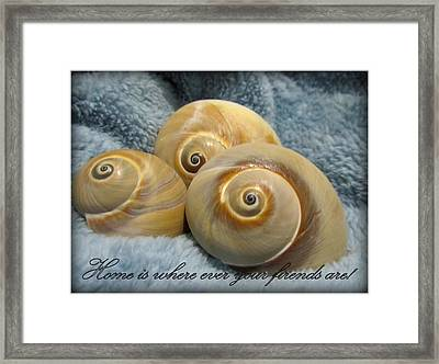 Framed Print featuring the photograph Three Of A Kind by Danielle  Parent