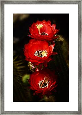 Three Of A Kind  Framed Print by Saija  Lehtonen