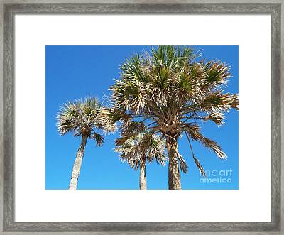 Framed Print featuring the photograph Three Palms by Jeanne Forsythe