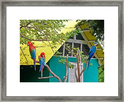 Framed Print featuring the photograph Three Parrots by Ann Murphy