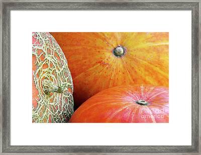 Three Pumpkins Framed Print by Carlos Caetano