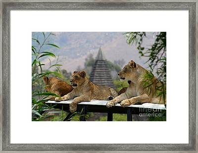Three Queens Framed Print