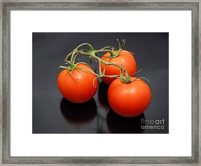 Three Red Tomatoes On The Vine Framed Print