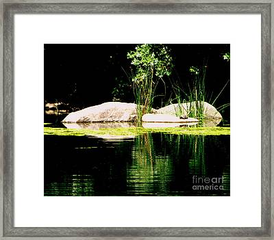 Three Rocks And A Turtle Framed Print by Maria Scarfone
