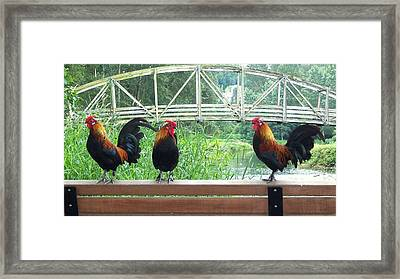 Three Roosters  Framed Print
