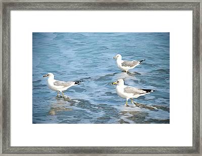 Framed Print featuring the photograph Three Seagulls by Kathy Gibbons