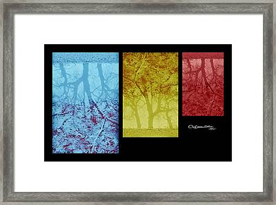 Three Seasons Framed Print by Xoanxo Cespon