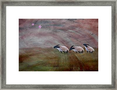 Three Sheep In The Wind And Pigs Fly Framed Print