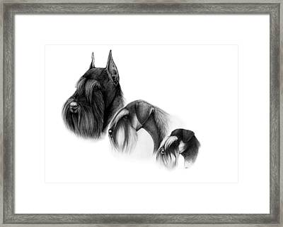 Three Sizes Of Schnauzers Framed Print by Katerina A Cechova