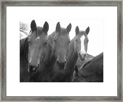Three Stooges Framed Print by Jessica Jandayan