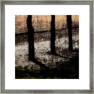 Three Tree Trunks Framed Print by Carol Leigh