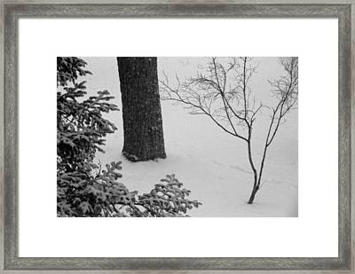 Three Trees In Snow Framed Print by Simone Hester