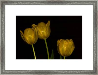 Framed Print featuring the photograph Three Tulips by Ed Gleichman