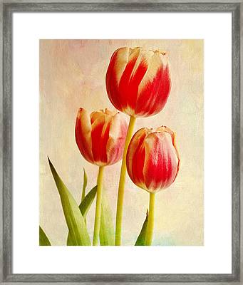 Framed Print featuring the photograph Three Tulips by James Bethanis