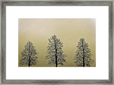 Threes Framed Print