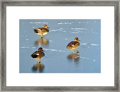 Threesome Framed Print by Marty Koch