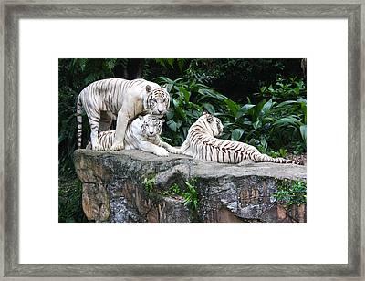 Threesome Framed Print