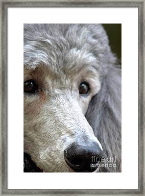 Through Dusty's Eyes Framed Print by Maria Urso