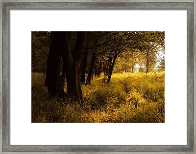 Through Enchanted Forest Framed Print