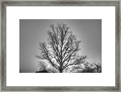 Through The Boughs Bw Framed Print by Dan Stone