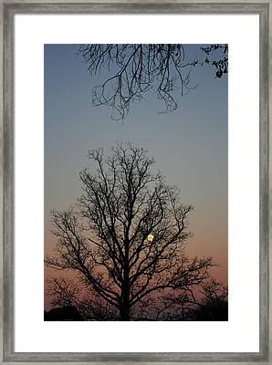 Through The Boughs Portrait Framed Print by Dan Stone