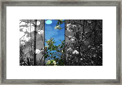 Through The Flowers Framed Print by Lee Yang