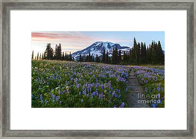 Through The Flowers Framed Print