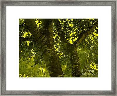 Through The Green Man's Eyes Framed Print