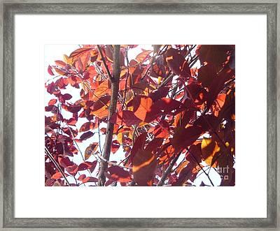 Through The Plum Tree I Framed Print by Alys Caviness-Gober