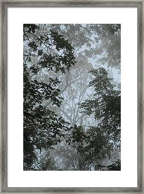 Through The Trees Framed Print by