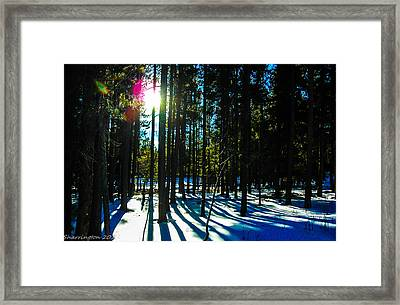 Framed Print featuring the photograph Through The Trees by Shannon Harrington