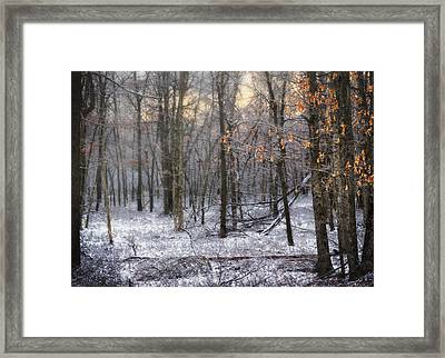 Framed Print featuring the photograph Through The Woods Into The Sunset by Yelena Rozov