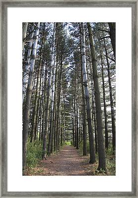 Through The Woods Framed Print by Jeannette Hunt