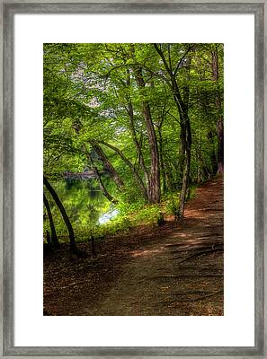 Through The Woods Framed Print by Joann Vitali