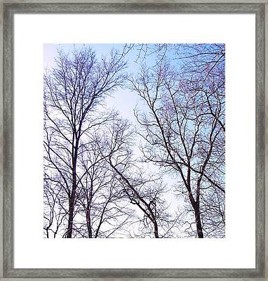 Framed Print featuring the photograph Through To Heaven by Pamela Hyde Wilson