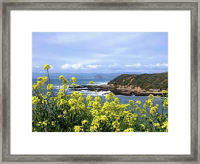 Through Yellow Flowers Framed Print
