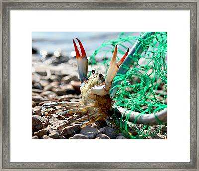 Crab Throw Me Something Mister Framed Print