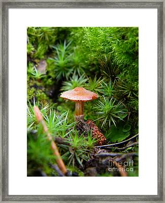 Thumbelina's Forest Framed Print